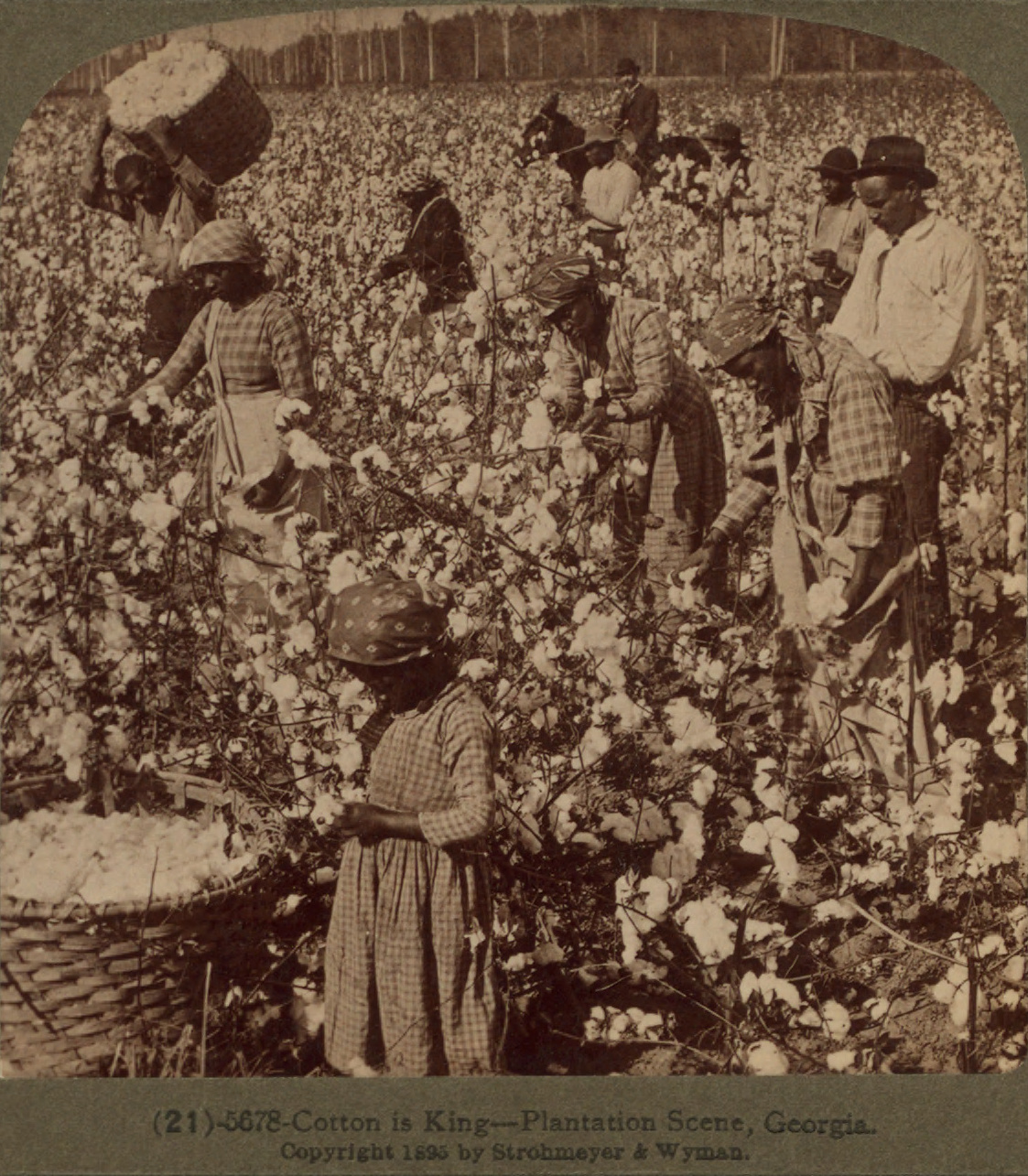 Slavery and King Cotton – US History I: Precolonial to Gilded Age